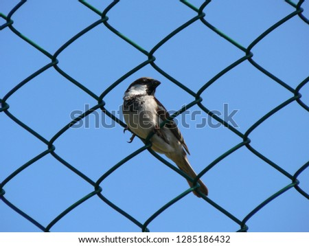 A bird in a chainlink fence. #1285186432