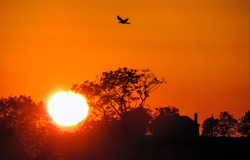 A bird in the sky against the background of sunset. Bird silhouette in sunset sky. Sunset sky. Bird in sunset sky