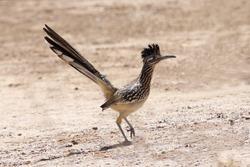A bird named