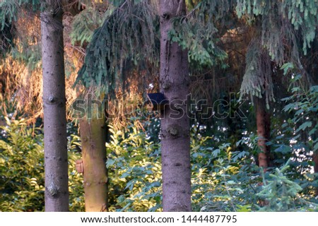 A bird on a birdhouse hanging on a tree in a forrest. Stockfoto ©