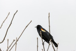 A bird on a tree branch wit ha blurred background