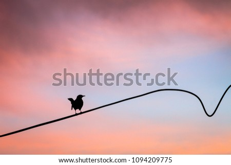 A bird perching on a powerline against the colorful backdrop of cloudy sky at sunset #1094209775