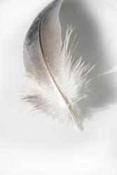 A bird's feather  pen, feather, nib, plume, blade, style