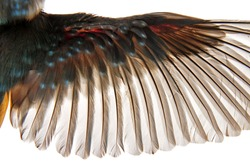 A bird's feathers on a white background, close-up pictures