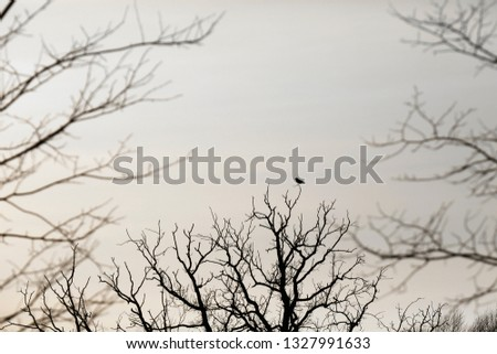 A bird sitting alone on top of a tree. Bare tree branches against winter sky covered with clouds. Framing blurred branches in the foreground #1327991633