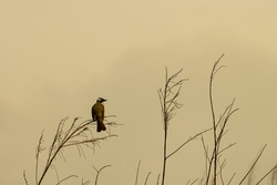 A bird standing on a branch at dusk