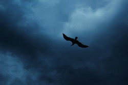 A bird, trying to rescue herself from the incoming sea storm