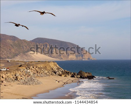 A Birds eye view – pic along route 1, California coast line reveals three pairs of large birds. Amazingly all pairs have synchronous wing beats. The rugged mountains along the ocean look enchanting.