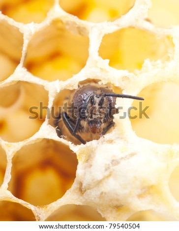 a birth of a bee, macro