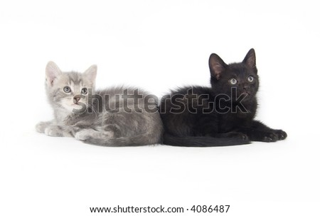 A black and gray kitten lay side by side on a white background
