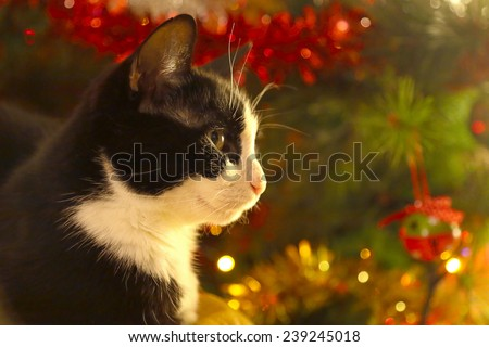 A black and white adult cat is sitting ahead a christmas pine tree decorated with lights and bubbles