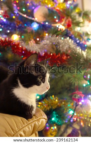 A black and white adult cat is sitting on a sofa in front of a christmas pine tree decorated with lights and bubbles