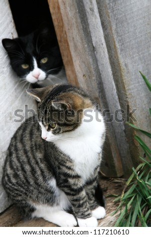 A black and white, and striped cat sitting in the doorway