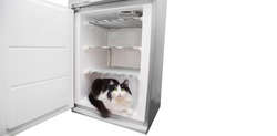 A black and white cat is sitting in the refrigerator. Fluffy cat escapes from the heat. On white background
