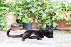 A black and white cat laying on cobblestones with potted plants in the background