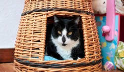 A black and white cat lying in a straw basket