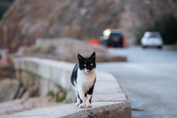 A black and white cat on the side of the road is licking its lips after eating. Blurry background. Cute street cat in its natural habitat in winter.