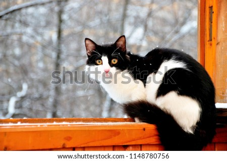 a black and white  cat sitting on a on a wooden window ledge #1148780756