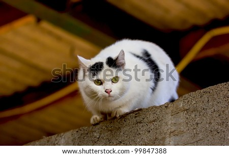A black and white cat sitting on an indoor roof