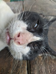 a black and white cat sleeping with one eye open is so cute