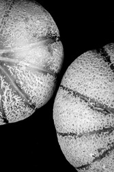 A black and white close view of two honeydew melons.
