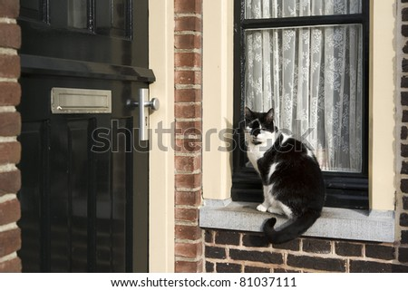 A black and white colored cat is sitting in front of a window waiting to get inside