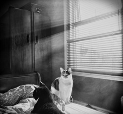 A black and white image of two cats on an unmade bed, basking in the sun rays that are bleeding through a blind in a smokey room.