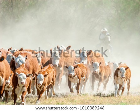 A black and white photo of a cowboy on a horse shrouded in dust pushing a small herd of cattle through a dry dusty meadow.