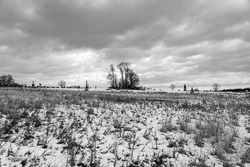 A black and white photo of a solemn winter scene on the Gettysburg National Military Park on the field of Pickett's Charge where union and confederate soldiers battled in July of 1863.