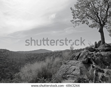 A black and white photograph of a lone tree on a rocky cliff overlooks Shenandoah National Park along Skyline Drive.