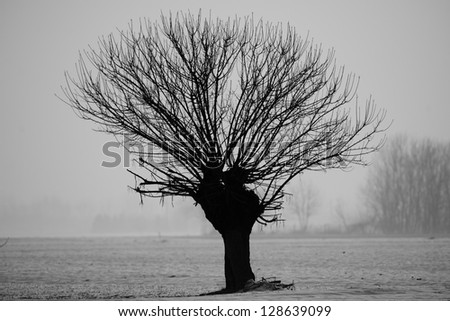 A black and white tree on white snow winter background