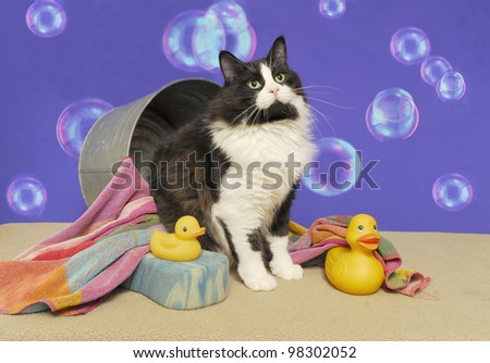 A Black and White Tuxedo Cat Sits in a Bathtub with a Striped Towel, Yellow Rubber Ducks, and a Sponge against a Backdrop of Floating Bubbles