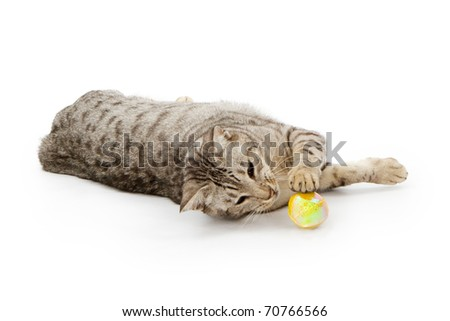 A black and white young cat laying down and playing with a soft ball. Isolated on white.