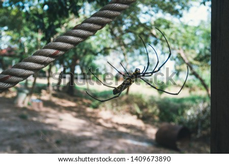 A black and yellow color spider is photographed close up, Black Widow Spider, macro picture, Natural background, colorful big spider in nature, spider web