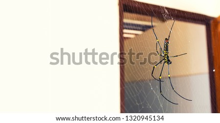 A black and yellow color spider is photographed close up, Black Widow Spider, macro picture,Natural background, colorful big and small spiders in nature, copy space, spider and spider web