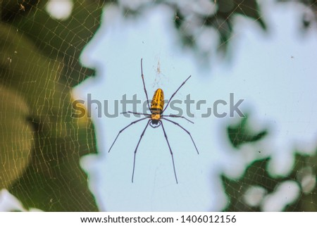 A black and yellow colour spider is photographed close up, Black Widow Spider, Natural background, colourful big and small spiders in nature, spider and spider web - Image Tropics Arachne #1406012156