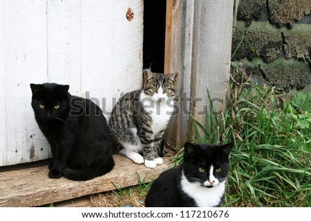 A black, black and white, and striped cat sitting in the doorway