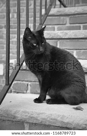 A black cat hangs out on a residential stoop in black and white