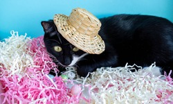 A black cat lies on the tinsel next to the eggs in a straw hat. Easter Concept