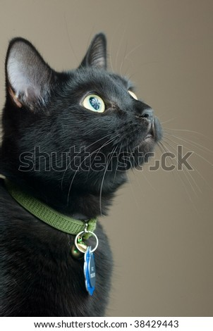 A black cat looks up into the air