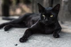 A black cat on street