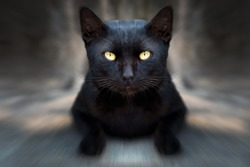 A black cat on street with zoom filter effect