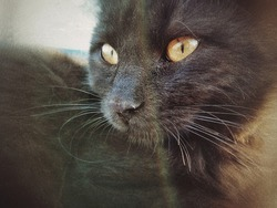 A black cat resting cautiously