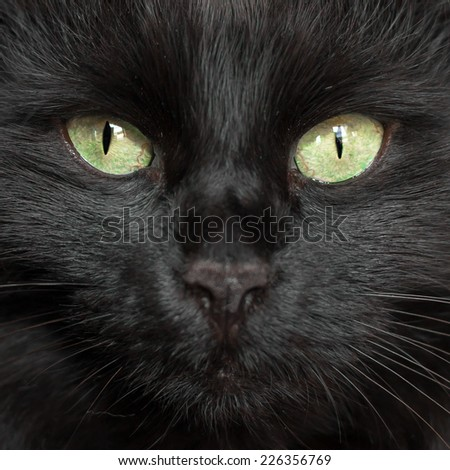 A black cat\'s face with a black nose.