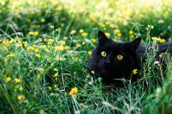 A black cat sits in the grass with yellow flowers. postcard for the international cat day. place to insert text.