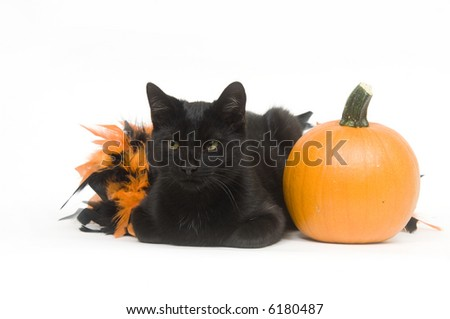 A black cat sits next to and plays in an orange and black Halloween decoration on white background