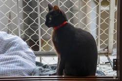 a black cat sitting on window with protection net seen by side