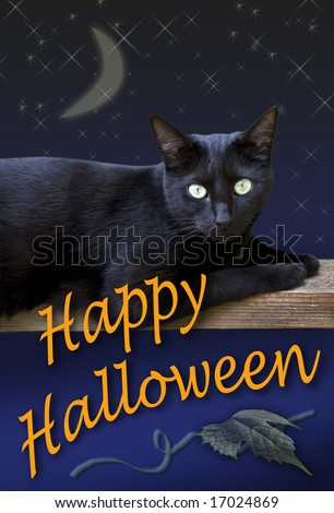 A black cat wishes you a Happy Halloween.