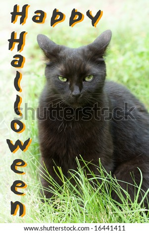A black cat wishes you a Happy Halloween (public domain free type).