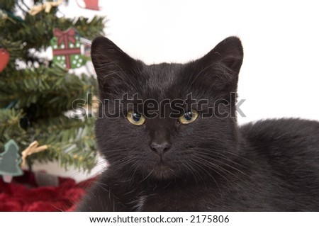 A black cat with a decorated Christmas tree in in the background on white.